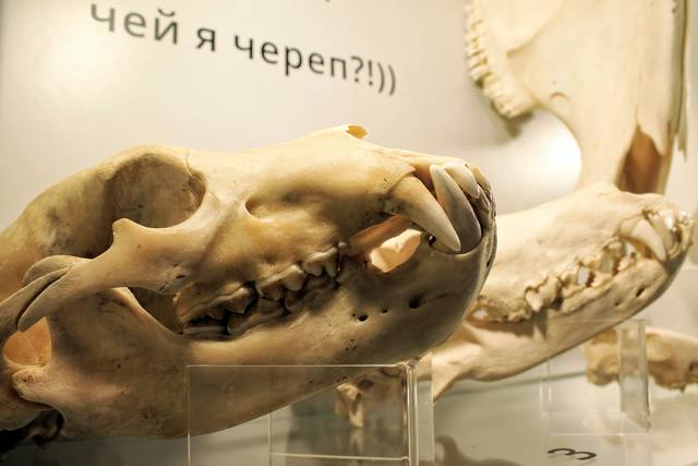 Музей Черепов и Скелетов/