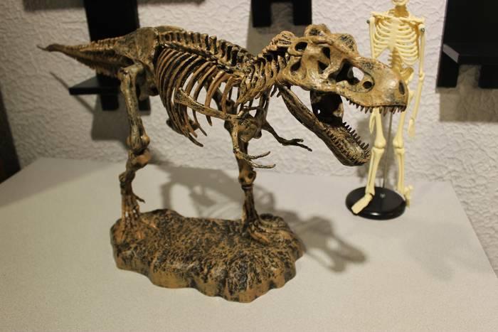 Музей Черепов и Скелетов/Достоверная уменьшенная модель скелета свирепого хищника планеты Земля
