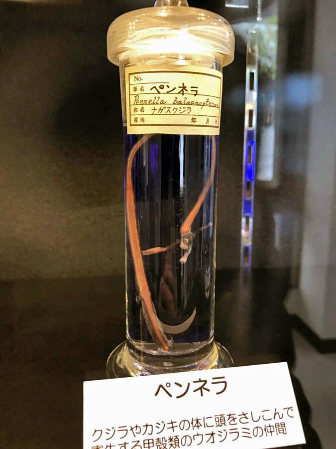 Музей Черепов и Скелетов/Мировые музеи анатомии: Япония